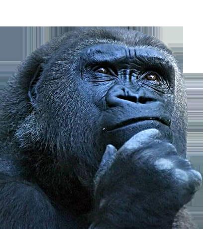 Macaco-pensando (2)