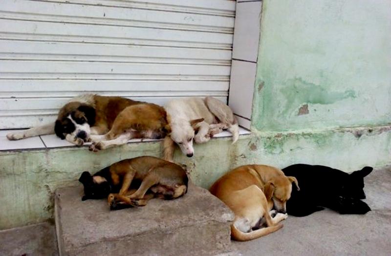 30 Cães e gatos de rua