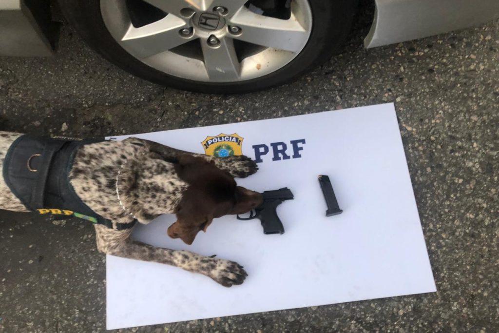 Cão encontra arma 17062019