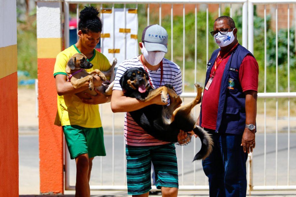 Os animais serão vacinados em três lugares no bairro Shangrilá/ Divulgação/PMBR