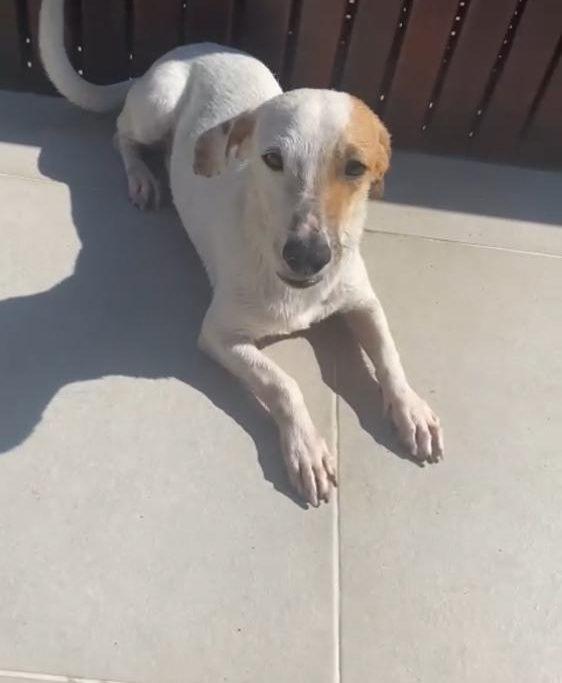 O cãozinho que ficava sob sol e chuva ganhou um lar de verdade/Divulgação/Governo do RJ