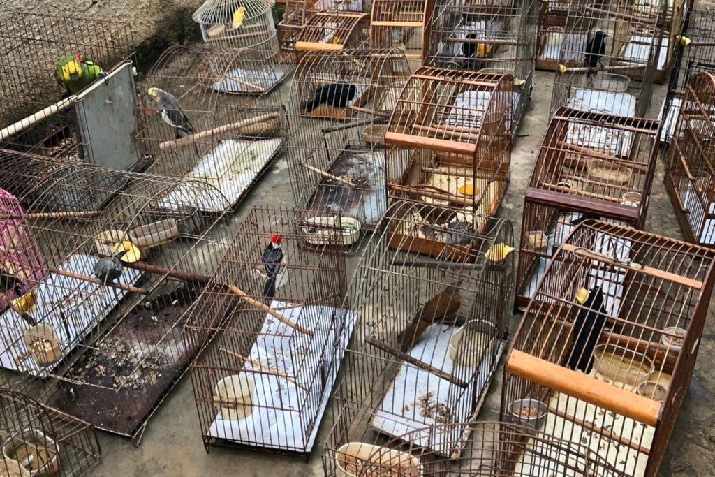 Foram encontrados no local 34 aves silvestres, além de 30 cães em estado de completo abandono/Divulgação