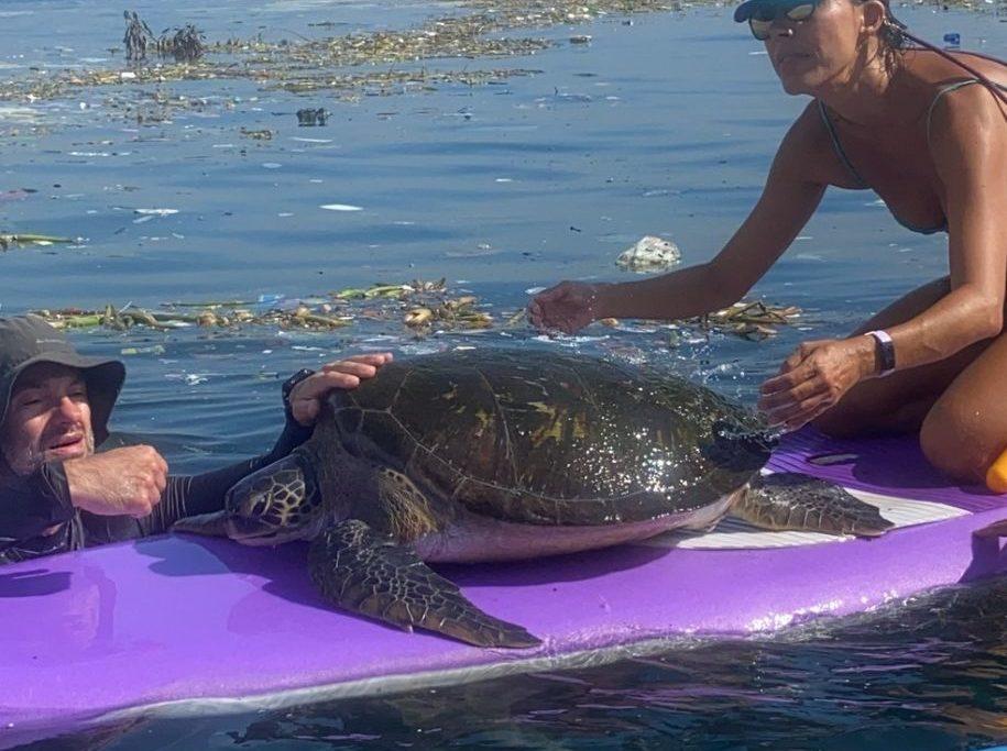 Tartaruga marinha é resgatada de lixo na Baía de Guanabara/Bianca Marques Rodrigues