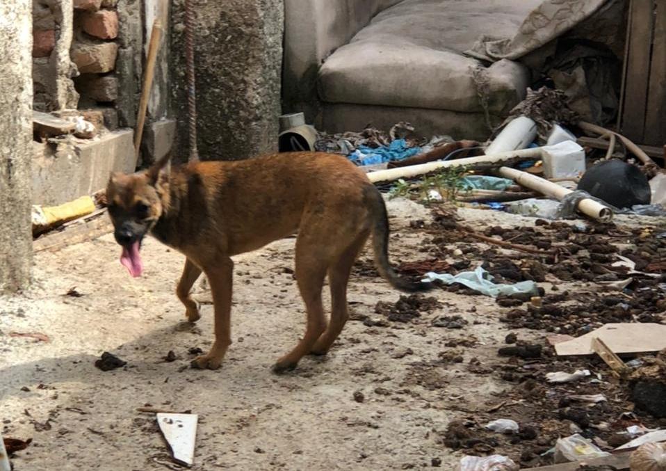 04 Cães abandonados 1