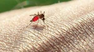 A doença é transmitida pela fêmea do mosquito do gênero Anopheles/Reprodução