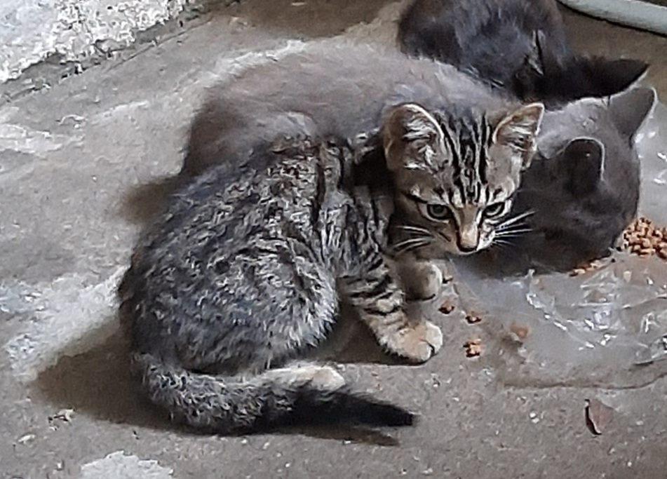 Os felinos são alimentados pelos moradores da região/Reprodução