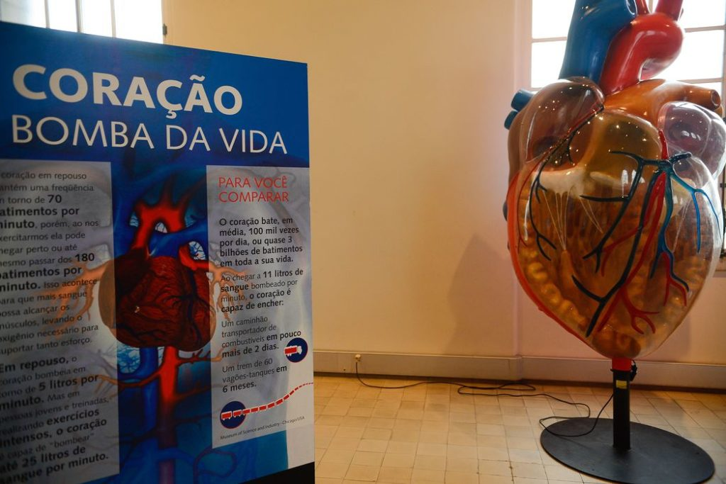 Exposição Vias do Coração no Museu da Vida, no Castelo da Fiocruz,  divulga o conhecimento sobre o coração, para estimular a prevenção das doenças cardiovasculares (Tomaz Silva/Agência Brasil)