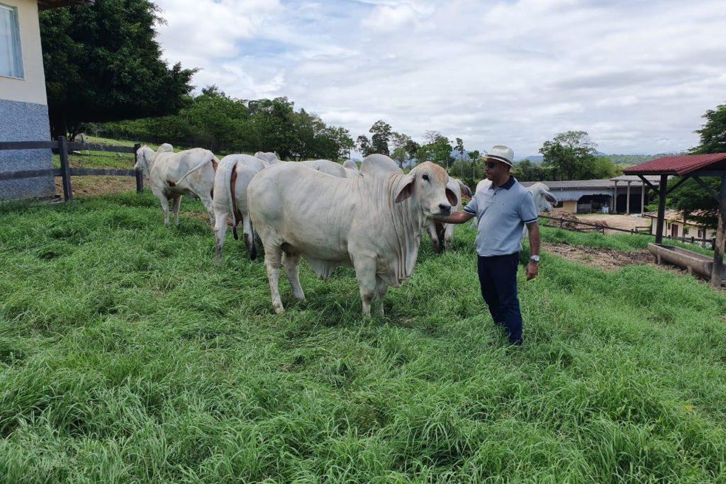 Estado do Rio conta com mais de 2,5 milhões de cabeças de gado/Divulgação/Governo do RJ