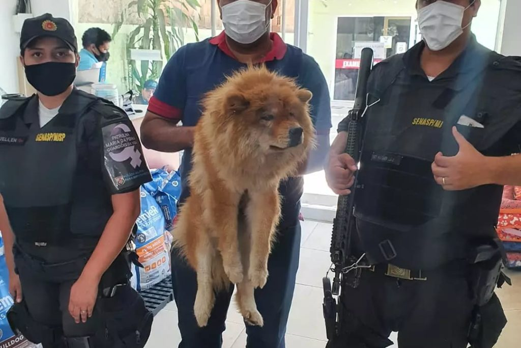 O protetor de animais Rodolfo Maya (c) ajudou no resgate da Chow Chow na Via Light, com o apoio dos policiais militares/Divulgação