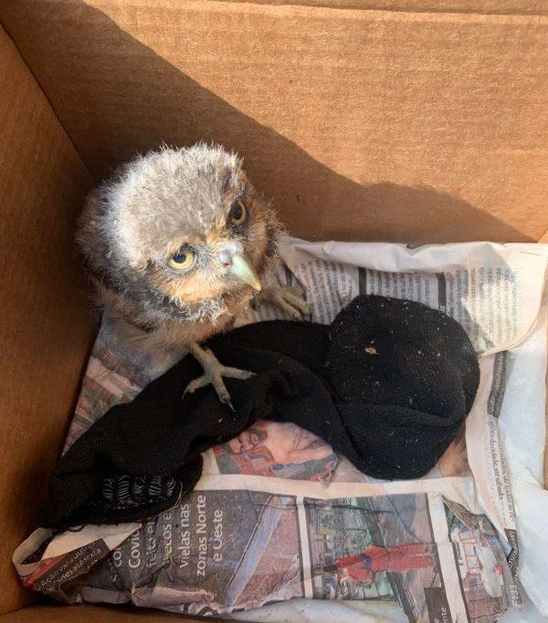 Uma coruja estava entre as aves apreendidas durante a operação ambiental/Divulgação: Governo do Estado